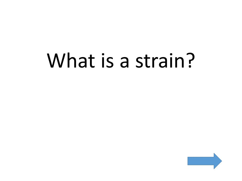 What is a strain