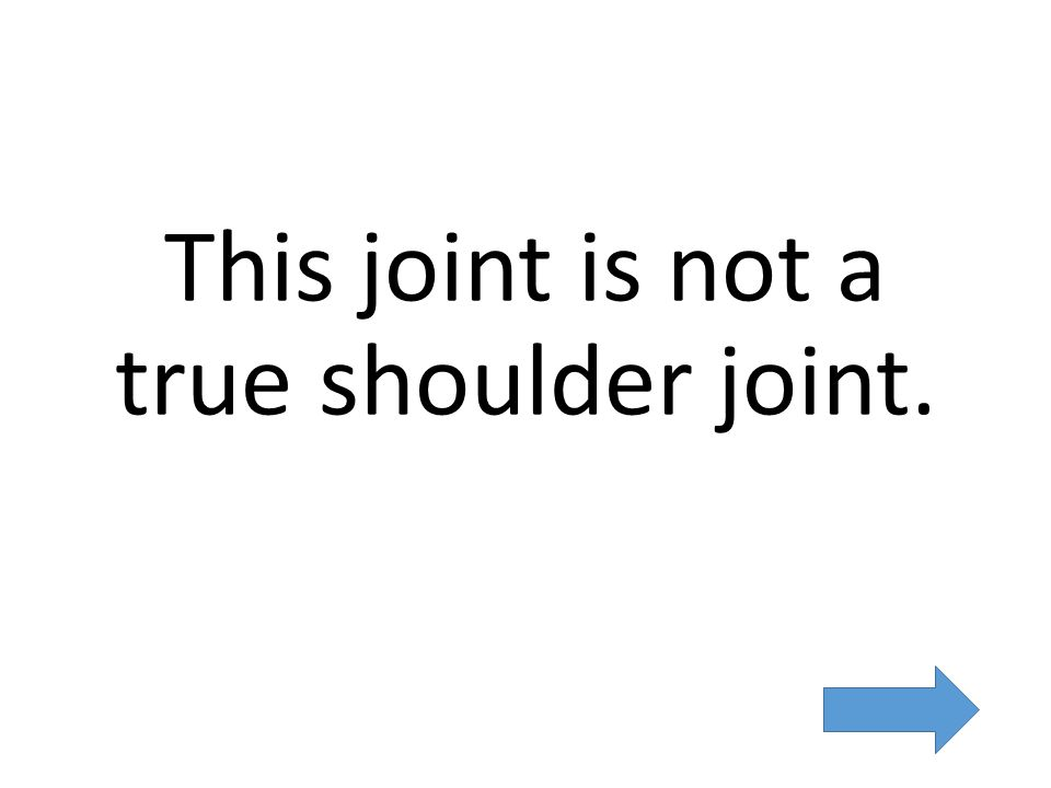 This joint is not a true shoulder joint.