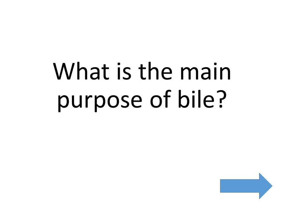 What is the main purpose of bile