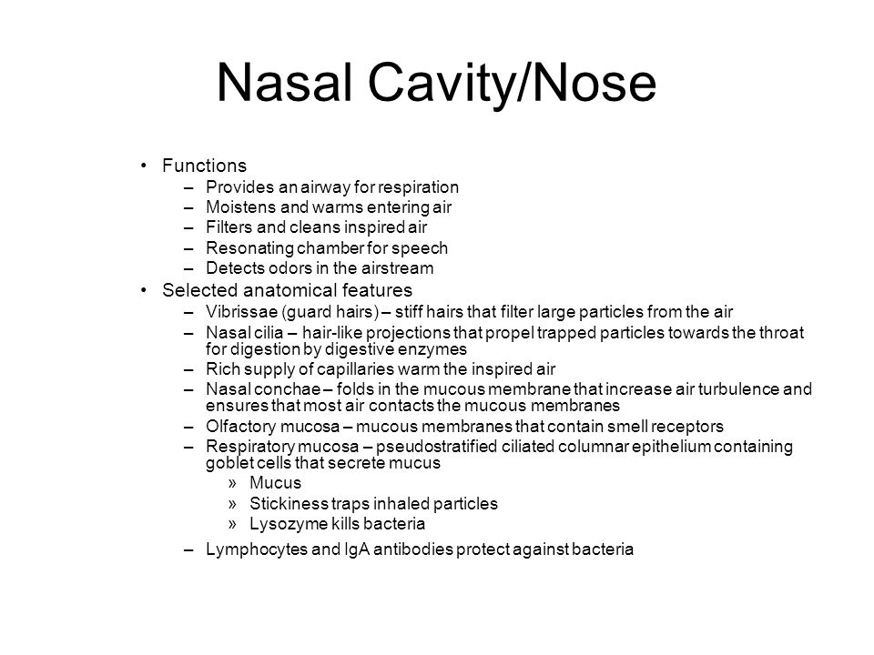 Nasal Cavity/Nose Functions –Provides an airway for respiration –Moistens and warms entering air –Filters and cleans inspired air –Resonating chamber