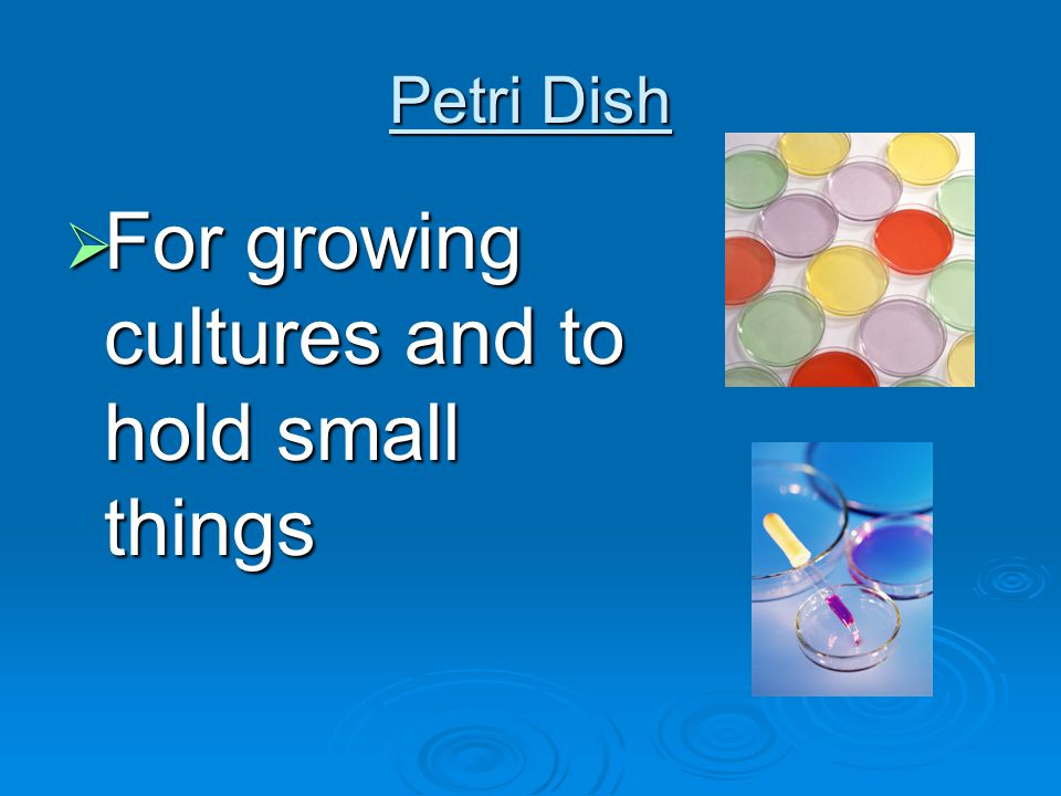 Petri Dish  For growing cultures and to hold small things