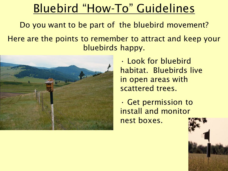 Bluebird How-To Guidelines Do you want to be part of the bluebird movement.