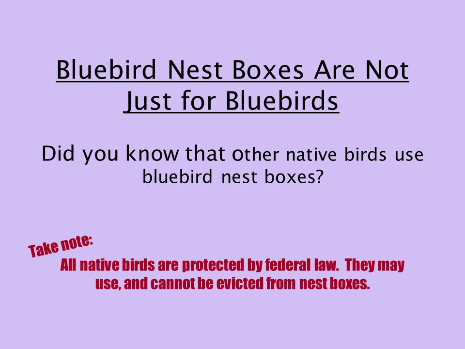 Bluebird Nest Boxes Are Not Just for Bluebirds Did you know that o ther native birds use bluebird nest boxes.