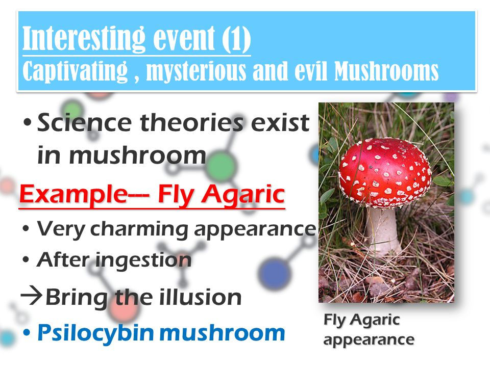 Science theories exist in mushroom Example--- Fly Agaric Very charming appearance After ingestion  Bring the illusion Psilocybin mushroom Fly Agaric appearance Interesting event (1) Captivating, mysterious and evil Mushrooms