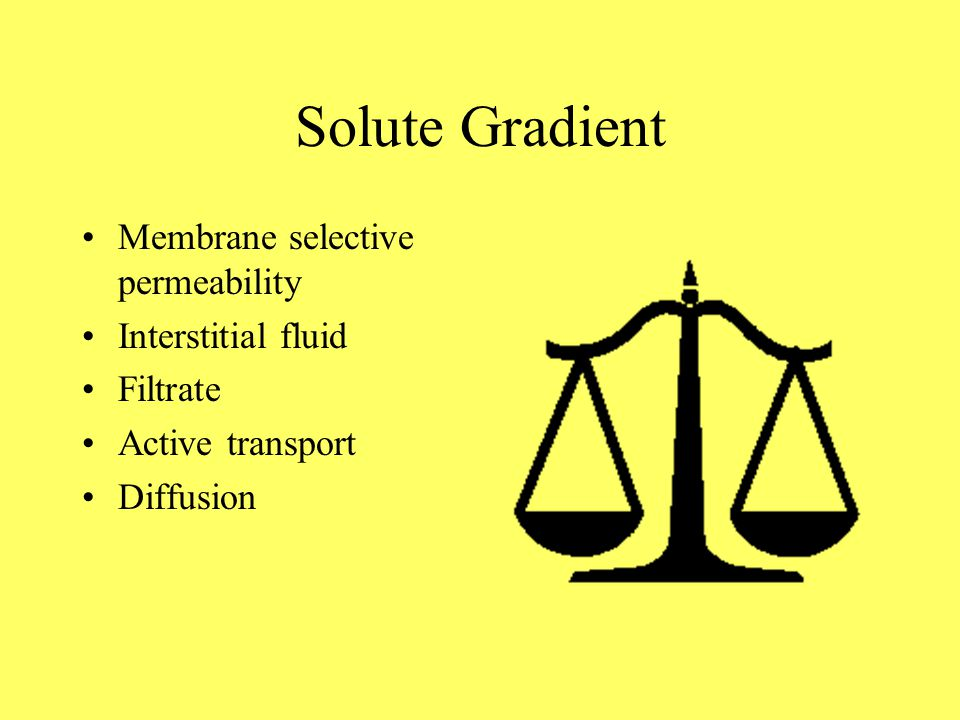 Solute Gradient Membrane selective permeability Interstitial fluid Filtrate Active transport Diffusion