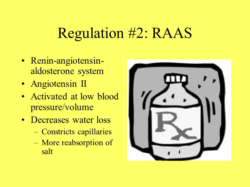 Regulation #2: RAAS Renin-angiotensin- aldosterone system Angiotensin II Activated at low blood pressure/volume Decreases water loss –Constricts capillaries –More reabsorption of salt