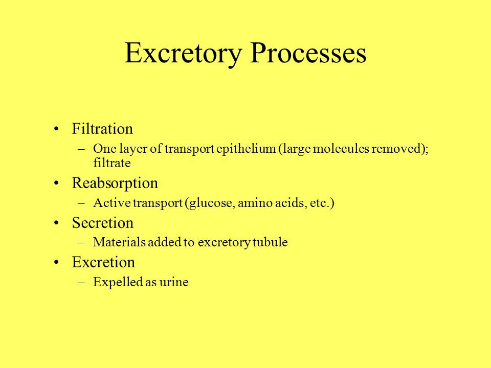Excretory Processes Filtration –One layer of transport epithelium (large molecules removed); filtrate Reabsorption –Active transport (glucose, amino acids, etc.) Secretion –Materials added to excretory tubule Excretion –Expelled as urine