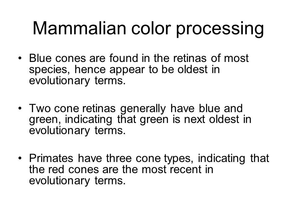 Mammalian color processing Blue cones are found in the retinas of most species, hence appear to be oldest in evolutionary terms.