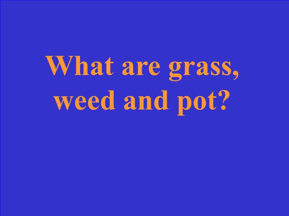 The three nicknames of marijuana.