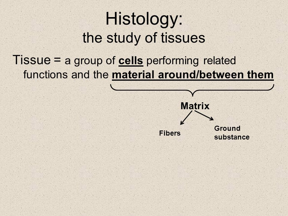 Histology: the study of tissues Tissue = a group of cells performing related functions and the material around/between them Matrix Fibers Ground subst