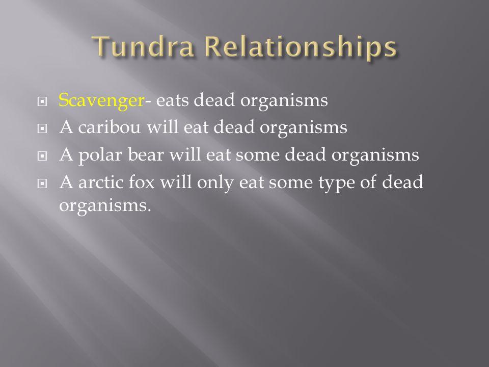  Scavenger- eats dead organisms  A caribou will eat dead organisms  A polar bear will eat some dead organisms  A arctic fox will only eat some typ