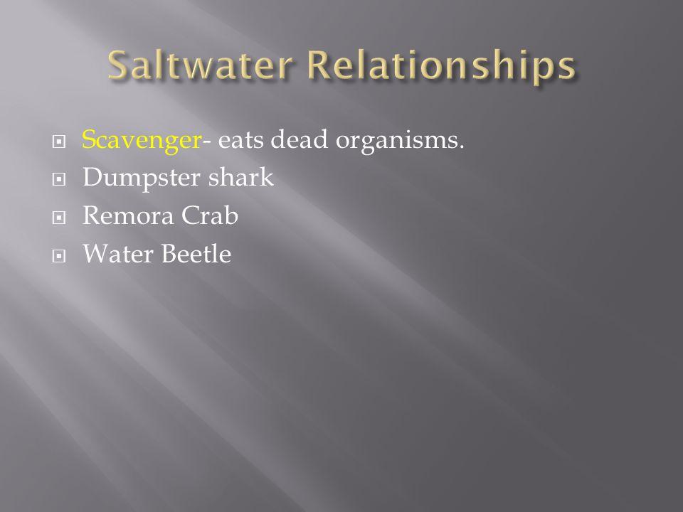  Scavenger- eats dead organisms.  Dumpster shark  Remora Crab  Water Beetle