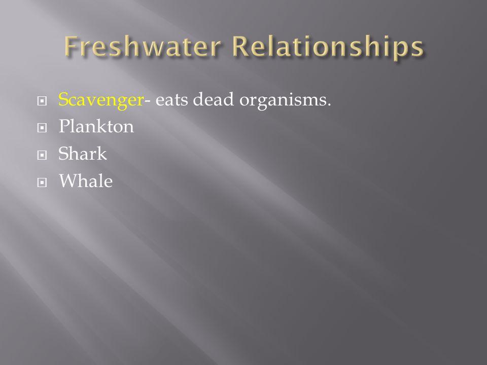  Scavenger- eats dead organisms.  Plankton  Shark  Whale