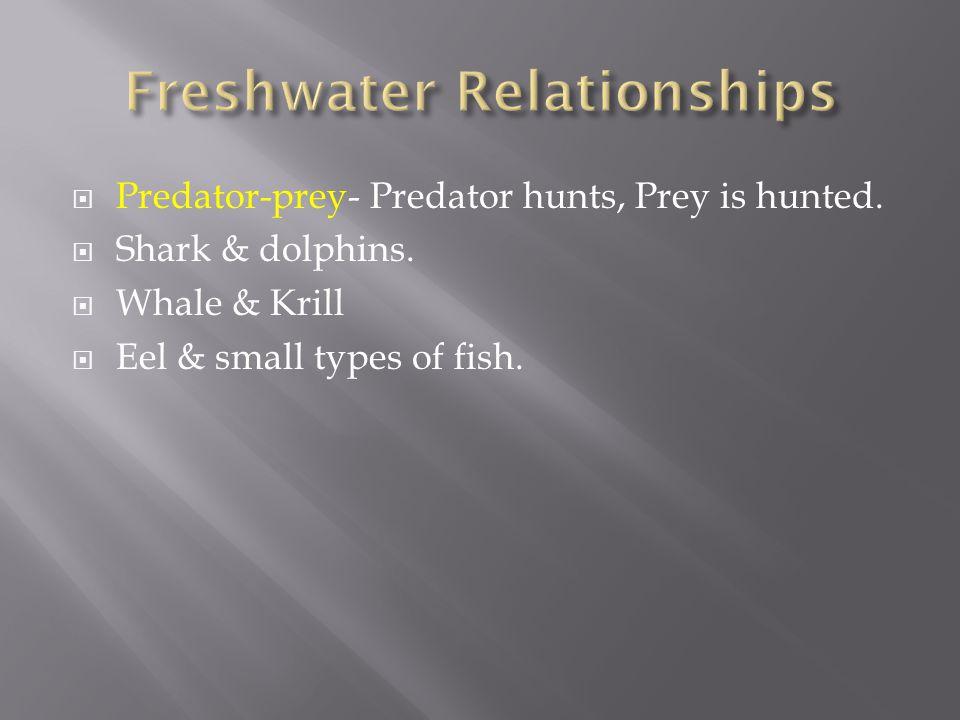  Predator-prey- Predator hunts, Prey is hunted.  Shark & dolphins.  Whale & Krill  Eel & small types of fish.