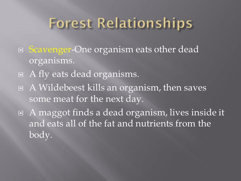  Scavenger-One organism eats other dead organisms.  A fly eats dead organisms.  A Wildebeest kills an organism, then saves some meat for the next d