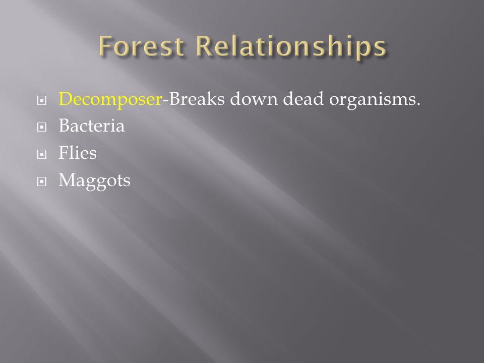  Decomposer-Breaks down dead organisms.  Bacteria  Flies  Maggots