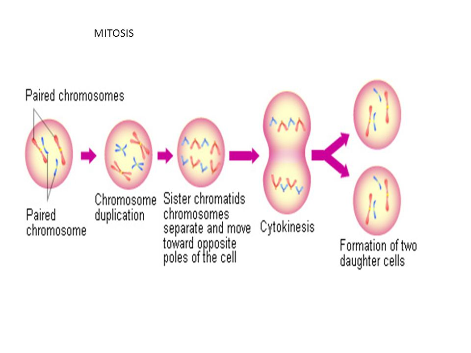 Bacterial Infections When body tissues are invaded by pathogenic bacteria.
