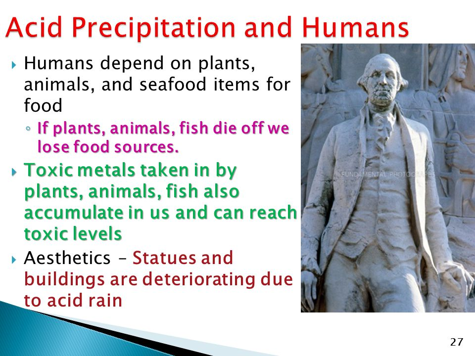  Humans depend on plants, animals, and seafood items for food ◦ If plants, animals, fish die off we lose food sources.  Toxic metals taken in by pla
