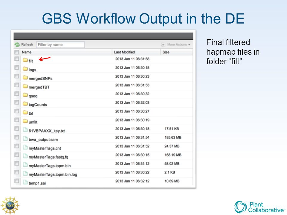 "GBS Workflow Output in the DE Final filtered hapmap files in folder ""filt"""