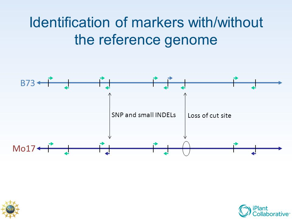 Identification of markers with/without the reference genome SNP and small INDELs B73 Mo17 Loss of cut site