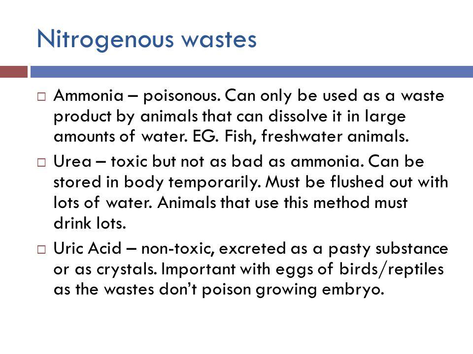 Nitrogenous wastes  Ammonia – poisonous.