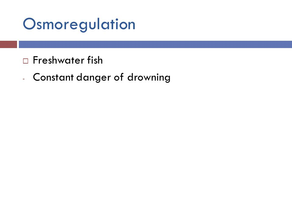 Osmoregulation  Freshwater fish - Constant danger of drowning