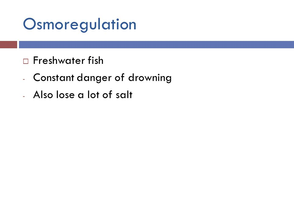 Osmoregulation  Freshwater fish - Constant danger of drowning - Also lose a lot of salt
