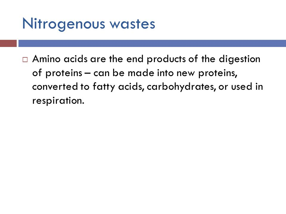 Nitrogenous wastes  Amino acids are the end products of the digestion of proteins – can be made into new proteins, converted to fatty acids, carbohydrates, or used in respiration.