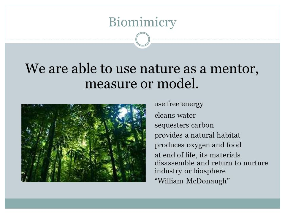 Biomimicry We are able to use nature as a mentor, measure or model.
