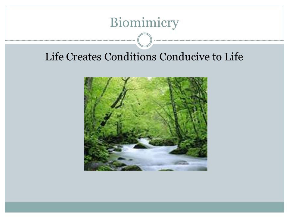 Biomimicry Life Creates Conditions Conducive to Life