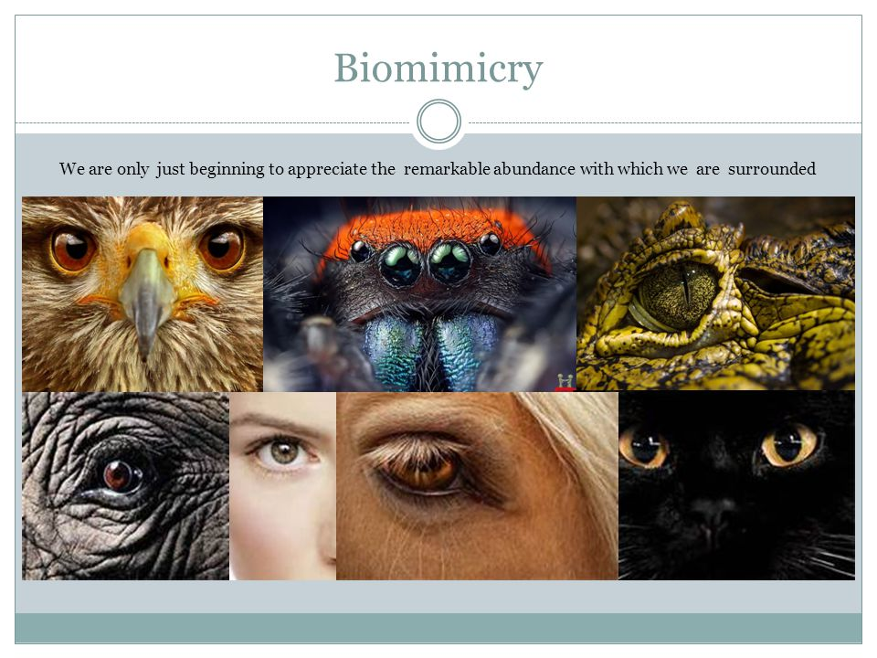 Biomimicry We are only just beginning to appreciate the remarkable abundance with which we are surrounded