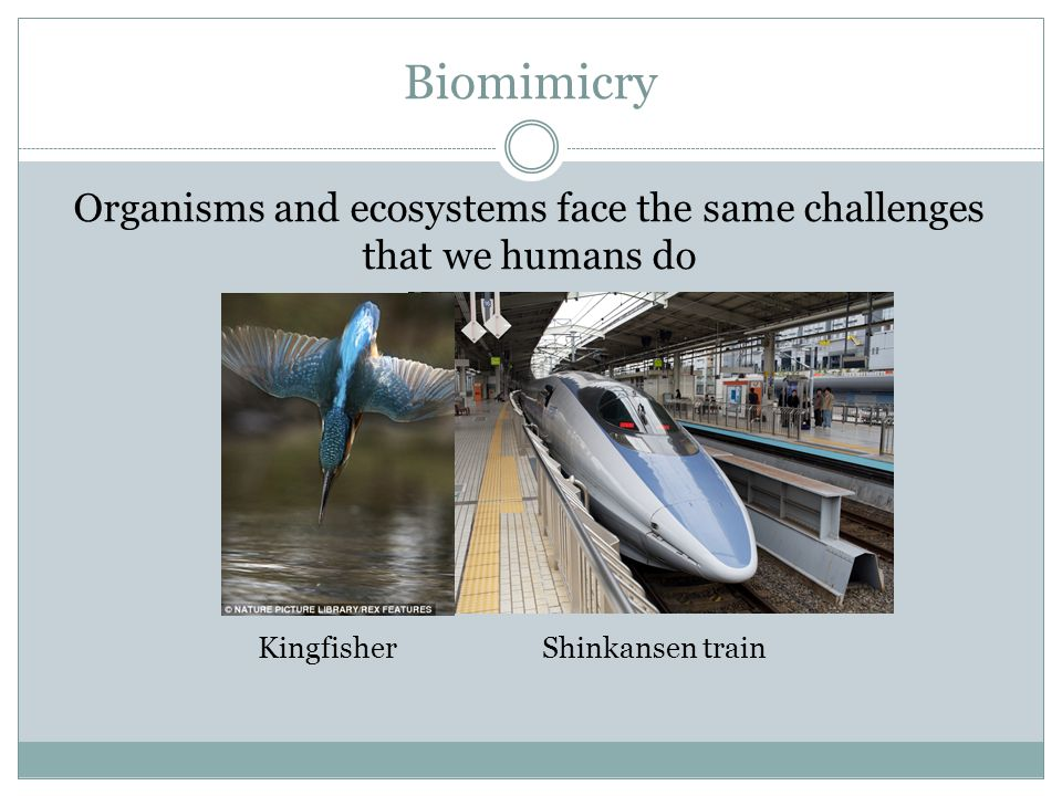 Biomimicry We are able to study the form, process and ecosystems found in nature.
