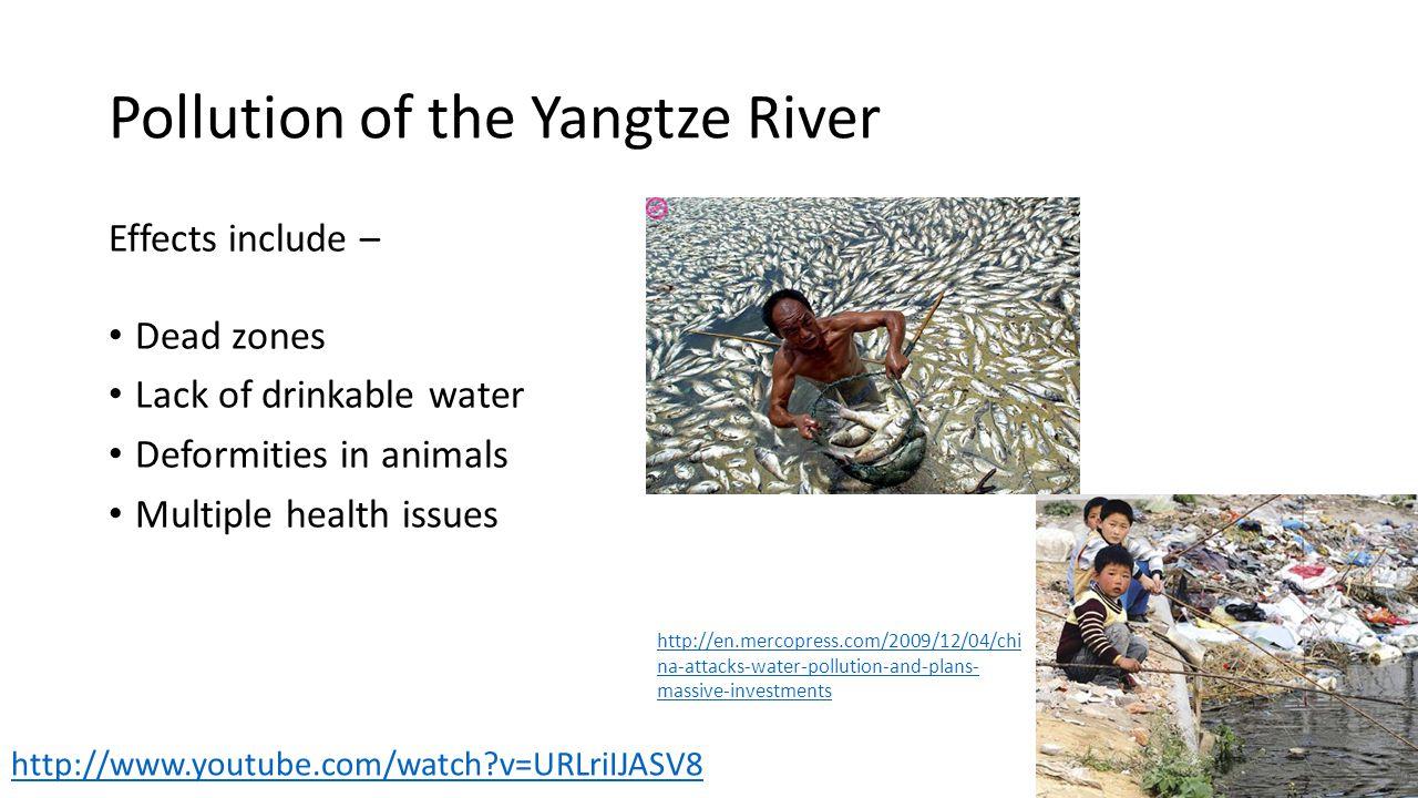 Pollution of the Yangtze River Effects include – Dead zones Lack of drinkable water Deformities in animals Multiple health issues http://en.mercopress