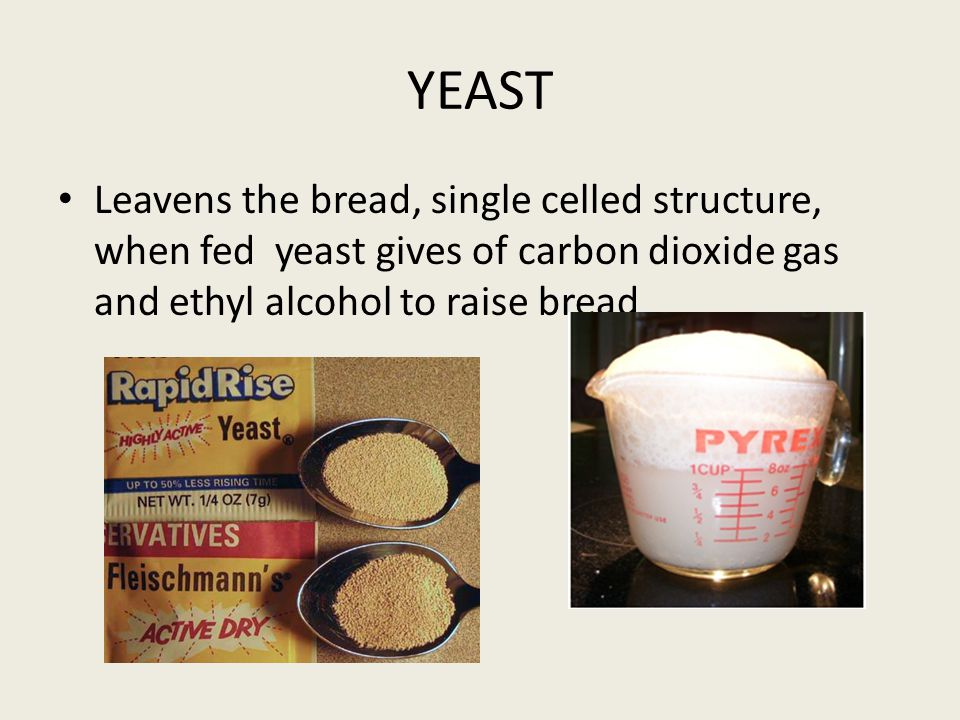YEAST Leavens the bread, single celled structure, when fed yeast gives of carbon dioxide gas and ethyl alcohol to raise bread
