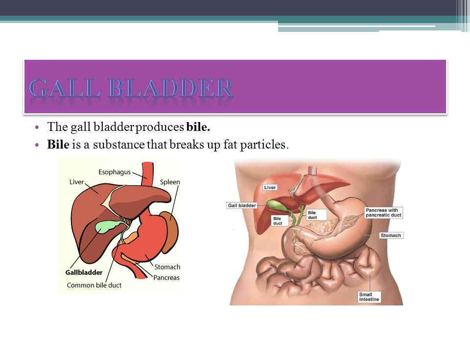 The gall bladder produces bile. Bile is a substance that breaks up fat particles.