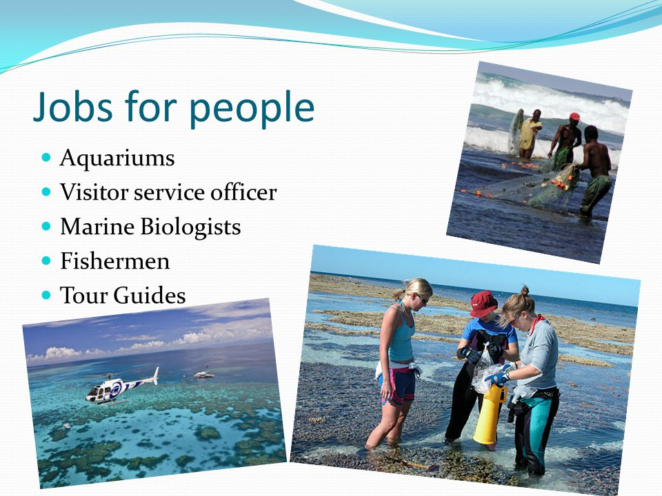 Jobs for people Aquariums Visitor service officer Marine Biologists Fishermen Tour Guides