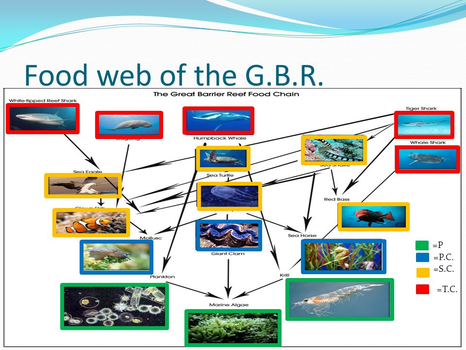 Food web of the G.B.R. =P =P.C. =S.C. =T.C.