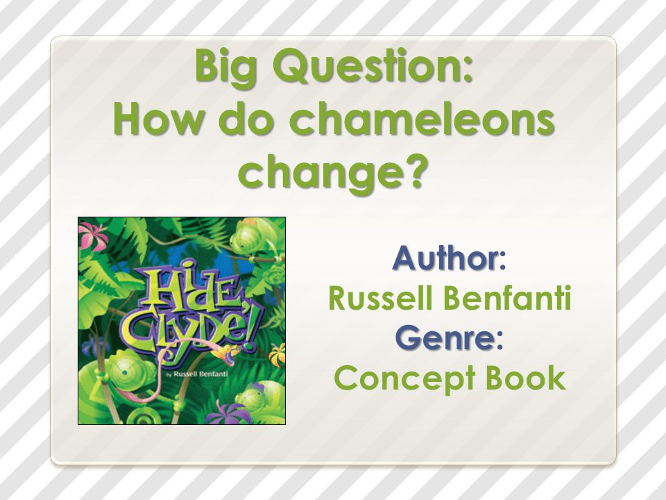 Big Question: How do chameleons change Author Author: Russell Benfanti Genre Genre: Concept Book