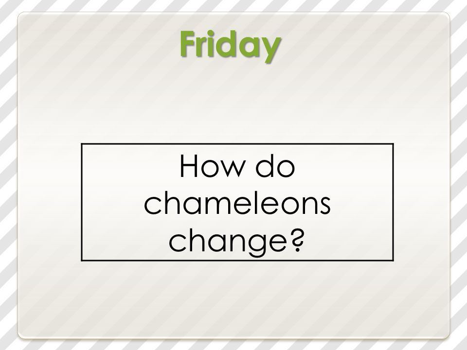 Friday How do chameleons change