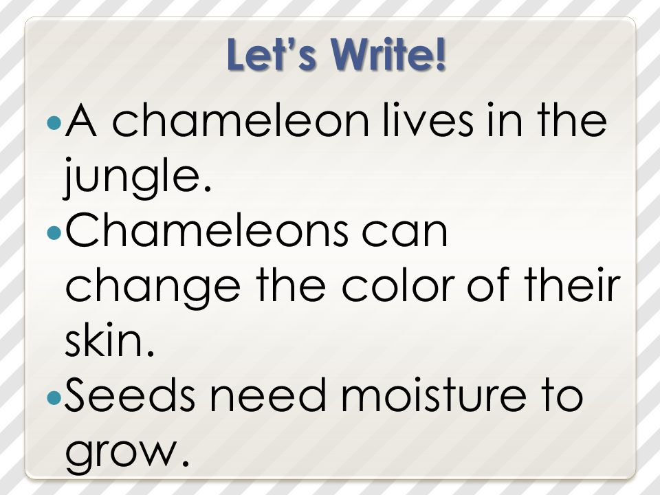 Let's Write. A chameleon lives in the jungle. Chameleons can change the color of their skin.
