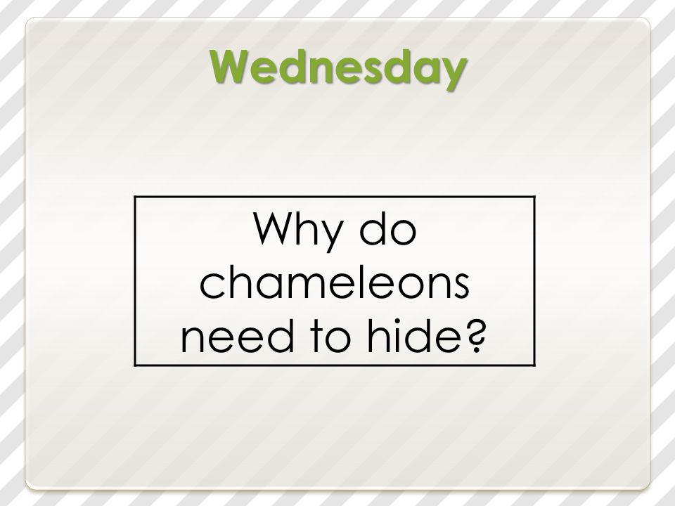 Wednesday Why do chameleons need to hide