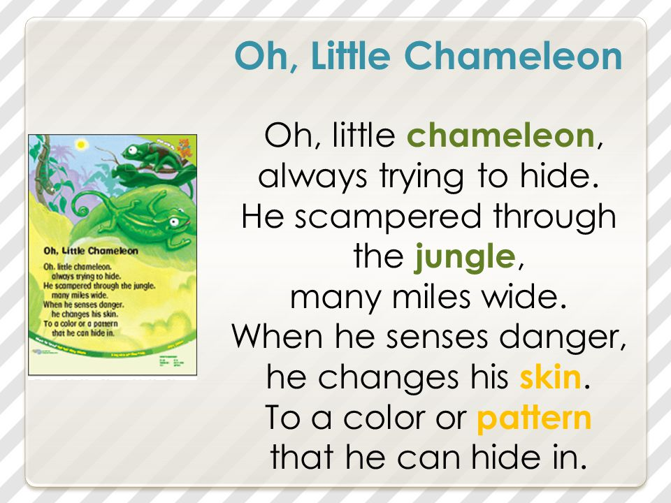 Oh, Little Chameleon Oh, little chameleon, always trying to hide.
