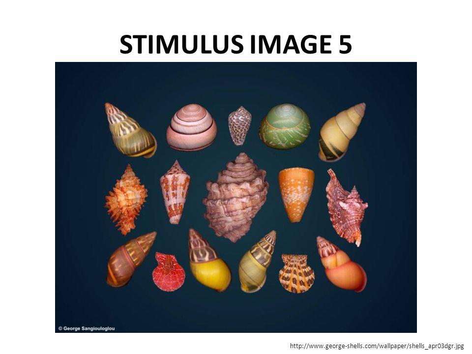 STIMULUS IMAGE 5 http://www.george-shells.com/wallpaper/shells_apr03dgr.jpg