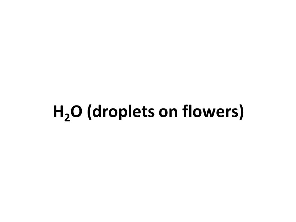 H 2 O (droplets on flowers)