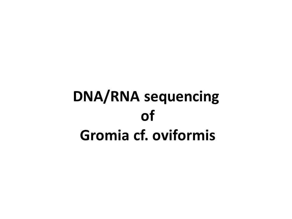 DNA/RNA sequencing of Gromia cf. oviformis