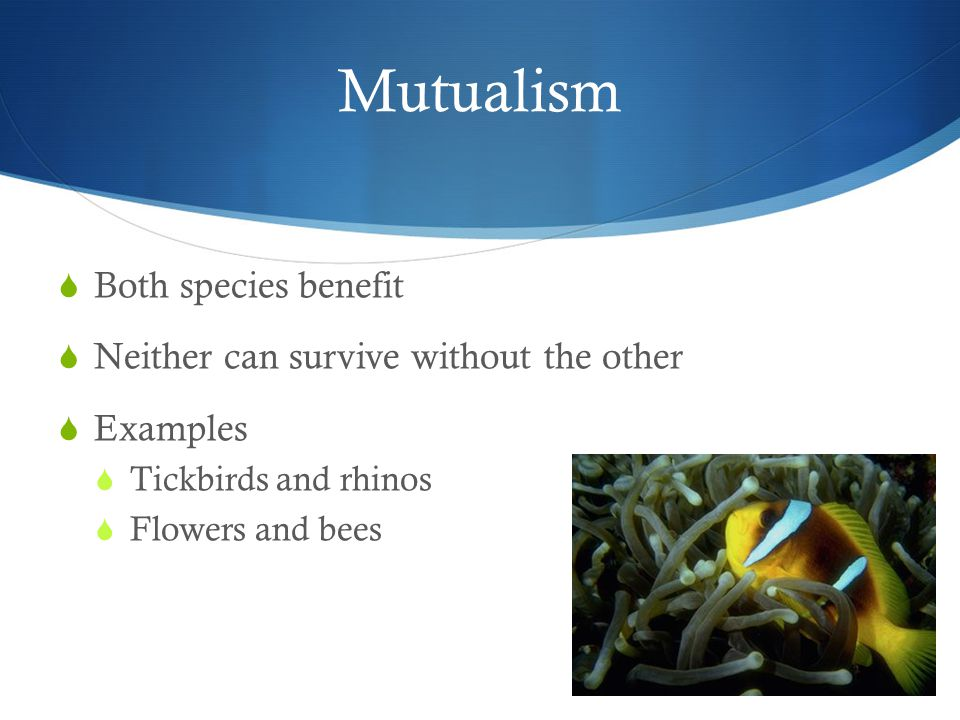 Mutualism  Both species benefit  Neither can survive without the other  Examples  Tickbirds and rhinos  Flowers and bees
