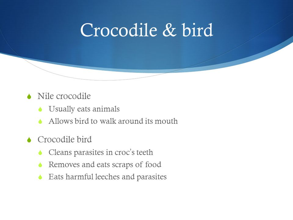 Crocodile & bird  Nile crocodile  Usually eats animals  Allows bird to walk around its mouth  Crocodile bird  Cleans parasites in croc ' s teeth  Removes and eats scraps of food  Eats harmful leeches and parasites