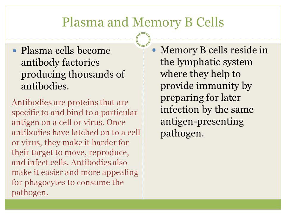 6.Antibody-mediated Specific Immunity.