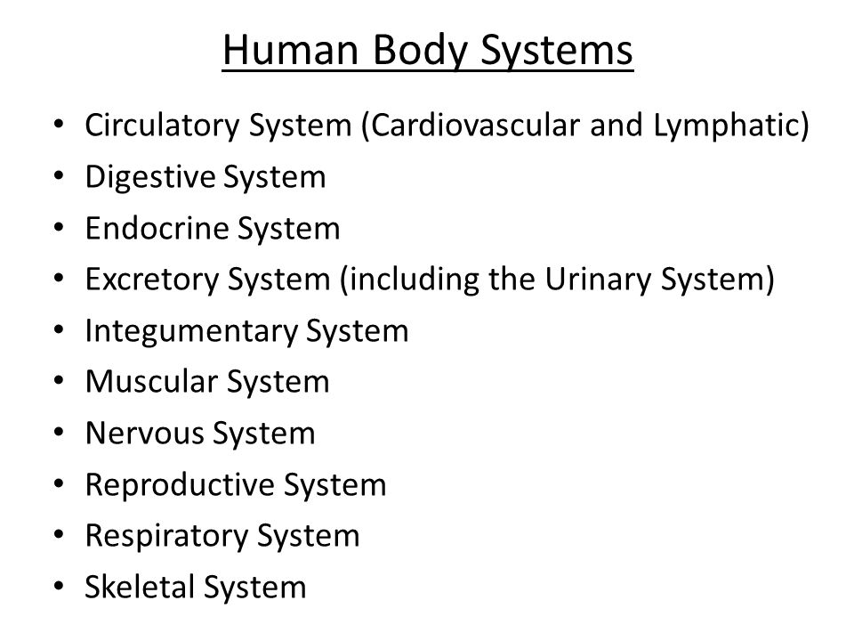 Human Body Systems Circulatory System (Cardiovascular and Lymphatic) Digestive System Endocrine System Excretory System (including the Urinary System)
