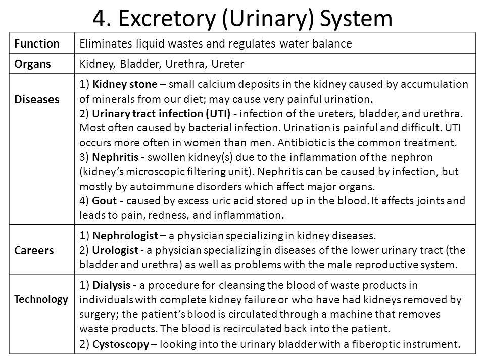 4. Excretory (Urinary) System FunctionEliminates liquid wastes and regulates water balance OrgansKidney, Bladder, Urethra, Ureter Diseases 1) Kidney s